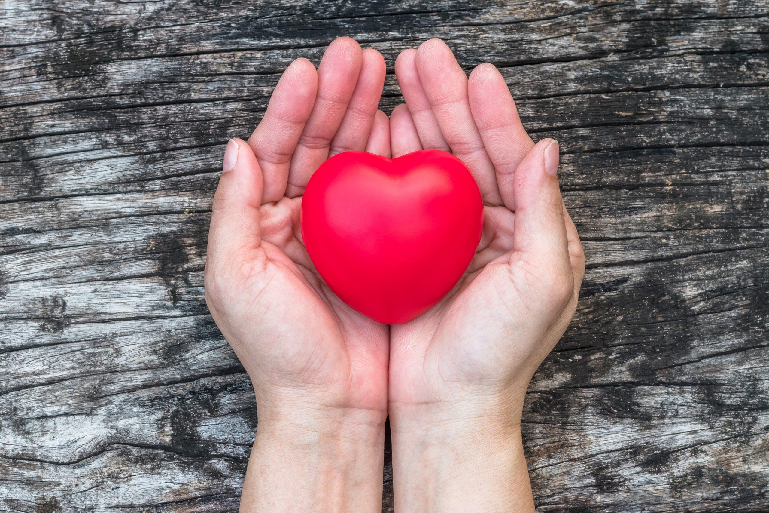 Rødt hjerte ligger i en kvindes foldede hænder